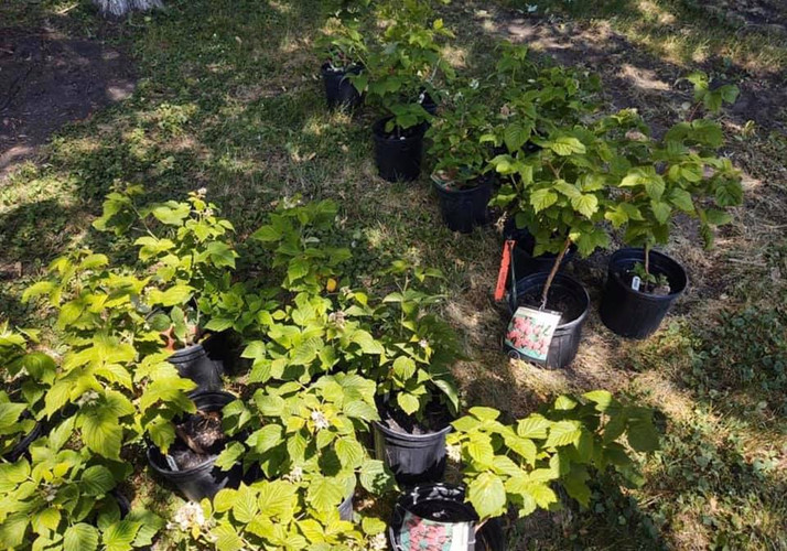 Appleton Community Orchard