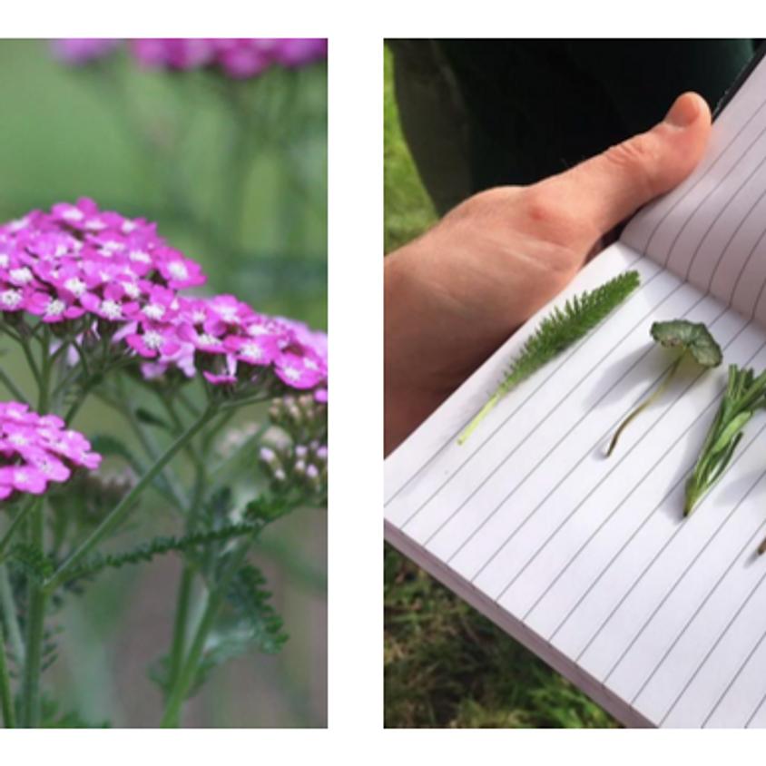 Balade naturopathie et plantes sauvages au bois de Vincennes  (1)