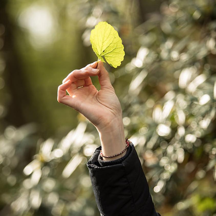 Balade naturopathie et plantes sauvages au bois de Vincennes