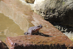 Odwiedziła nas żabka
