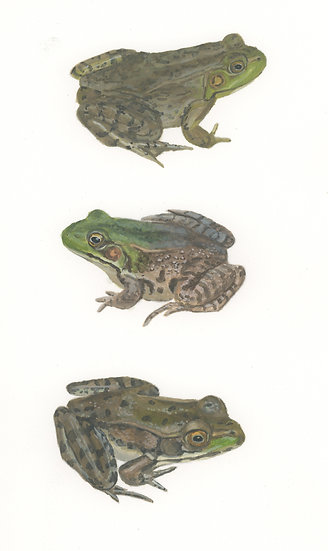 All the frogs 4