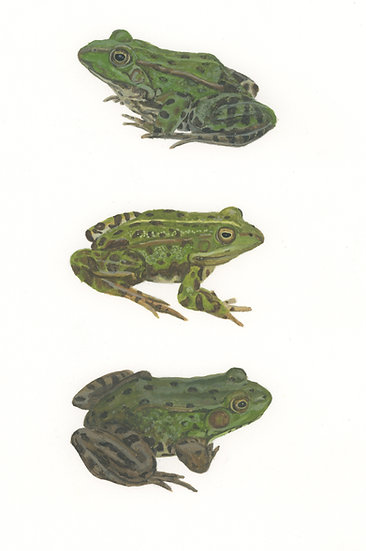 All the frogs 2