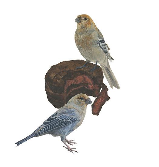 Gaspésie Still Life: Pine Grosbeaks and Jos Louis
