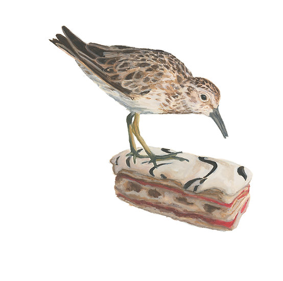 Gaspésie Still Life: Least Sandpiper and Mille Feuille