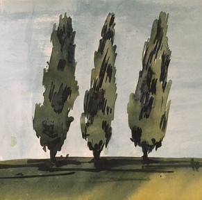 Cypressen