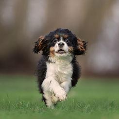 educ-sport-dog (22).jpg