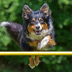 educ-sport-dog (23).jpg