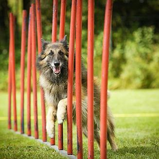 educ-sport-dog (33).jpg