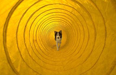 EDUC-SPORT-DOG (2).jpg
