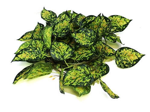Pangea Leafy Vine