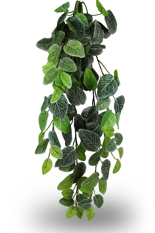 Pangea Hanging Bush - 24""