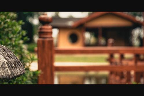 Japanese Garden - The Future