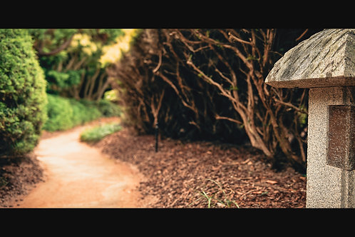 Japanese Garden - The Road Less Travelled