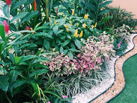 Como Diseñar y Mantener tu Jardin