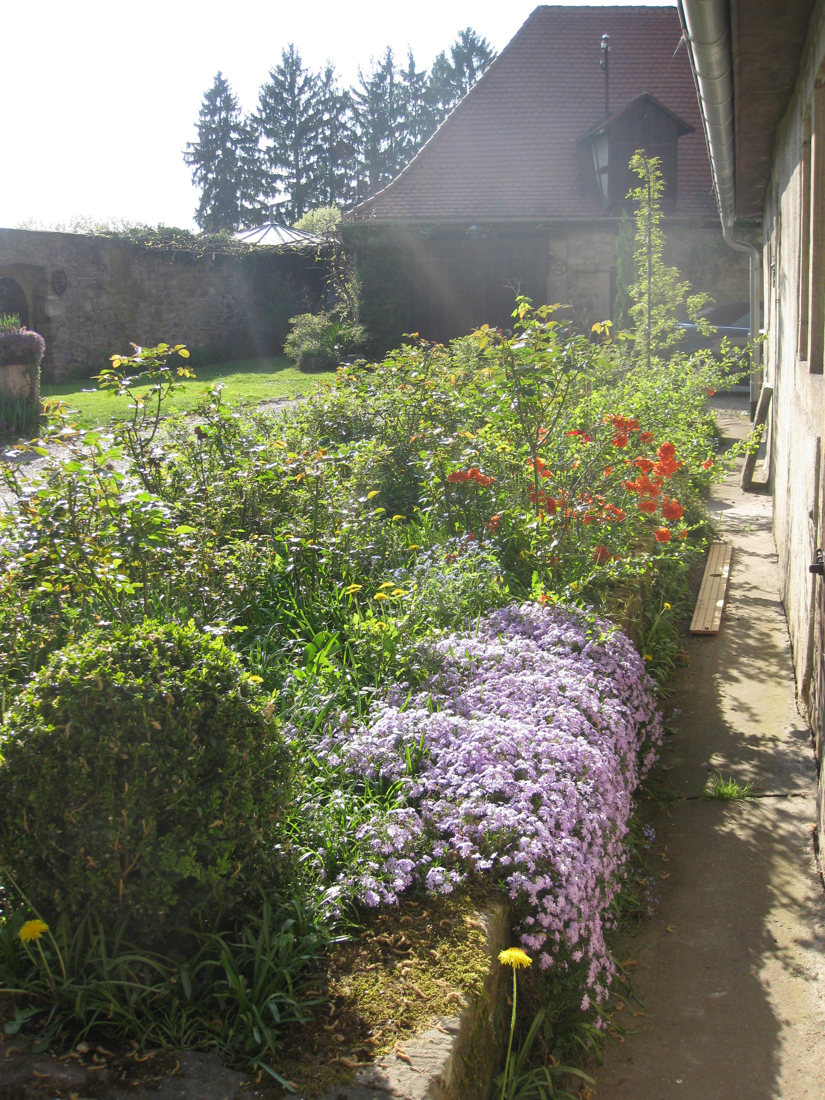 Blumen vor dem Bandhaus, Einfahrt