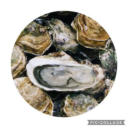 Cleo special Oyster-Oester-Huitre dag- & nachtcreme