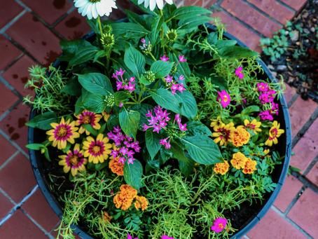 "World Pollinator Week: DIY ""Pollinator Pod"""