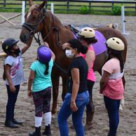 Girls meeting horses.jpg