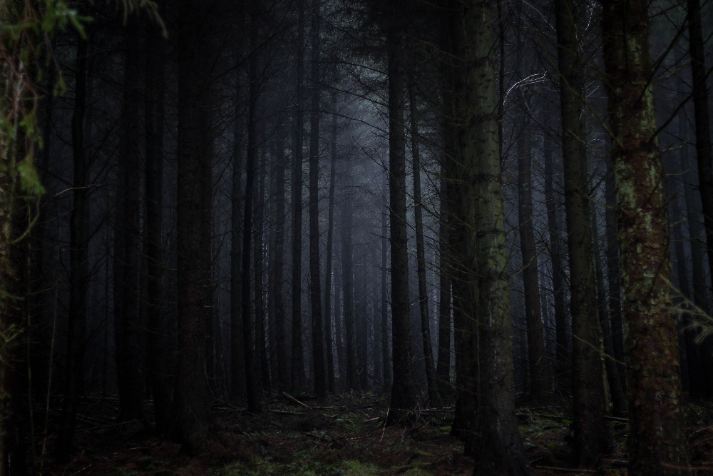 Creepy Forest photo by Rosie Fraser courtesy of Unsplash