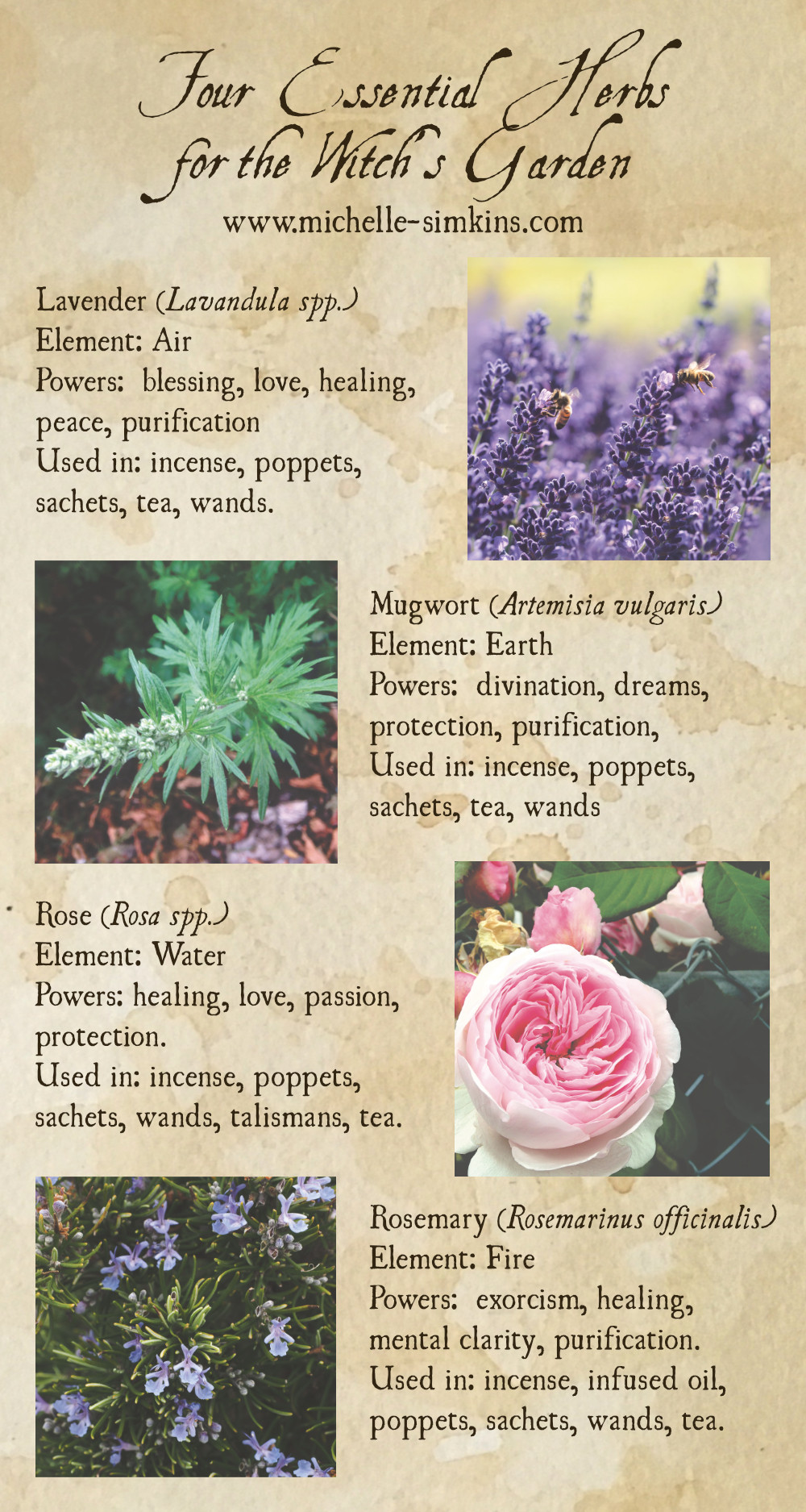 Four Essential Herbs for the Witch's Garden