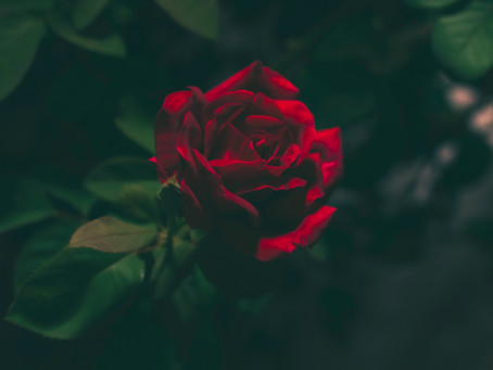 First Sunday Short Fiction: Red