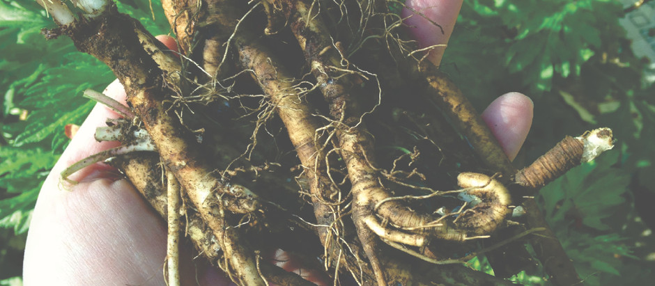 How to Gather Roots for Magic and Medicine