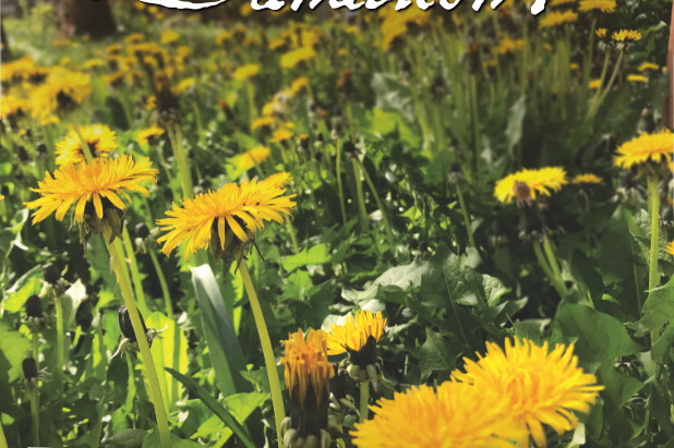 Do You Know Dandelion?