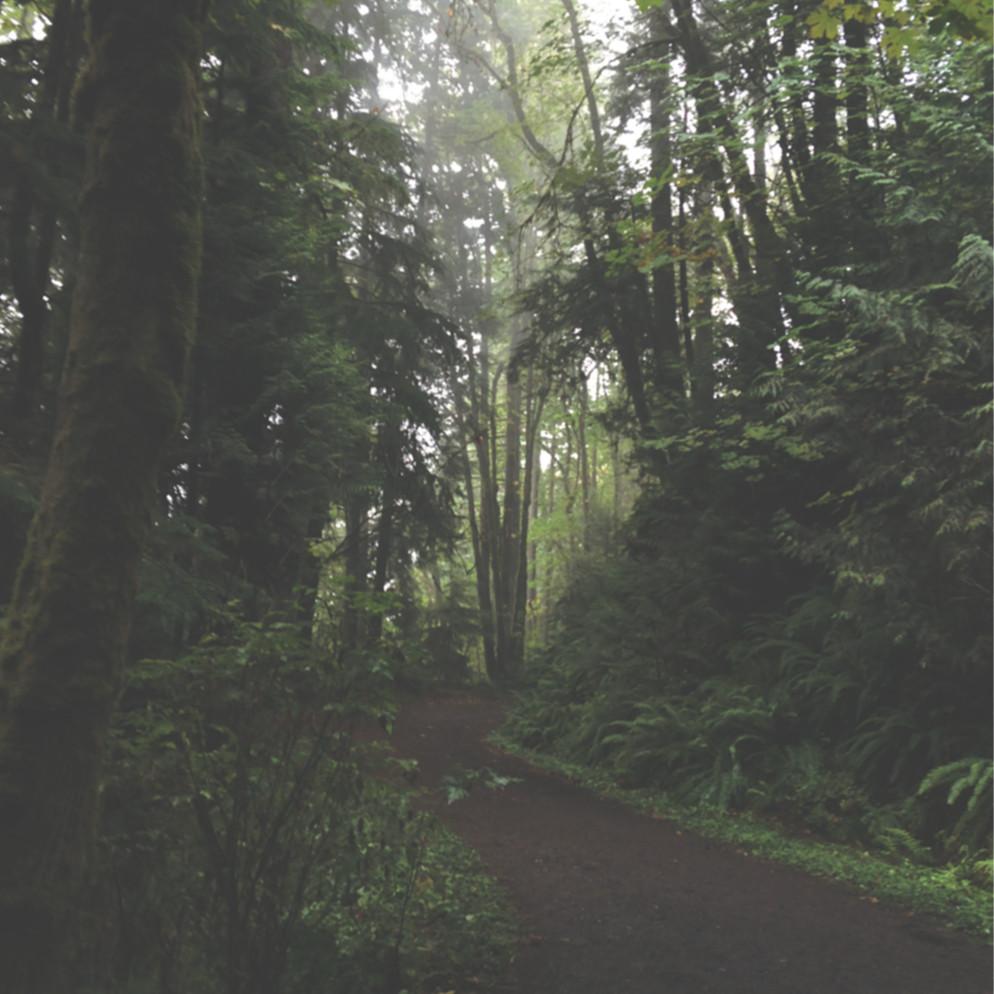 Shadowy path