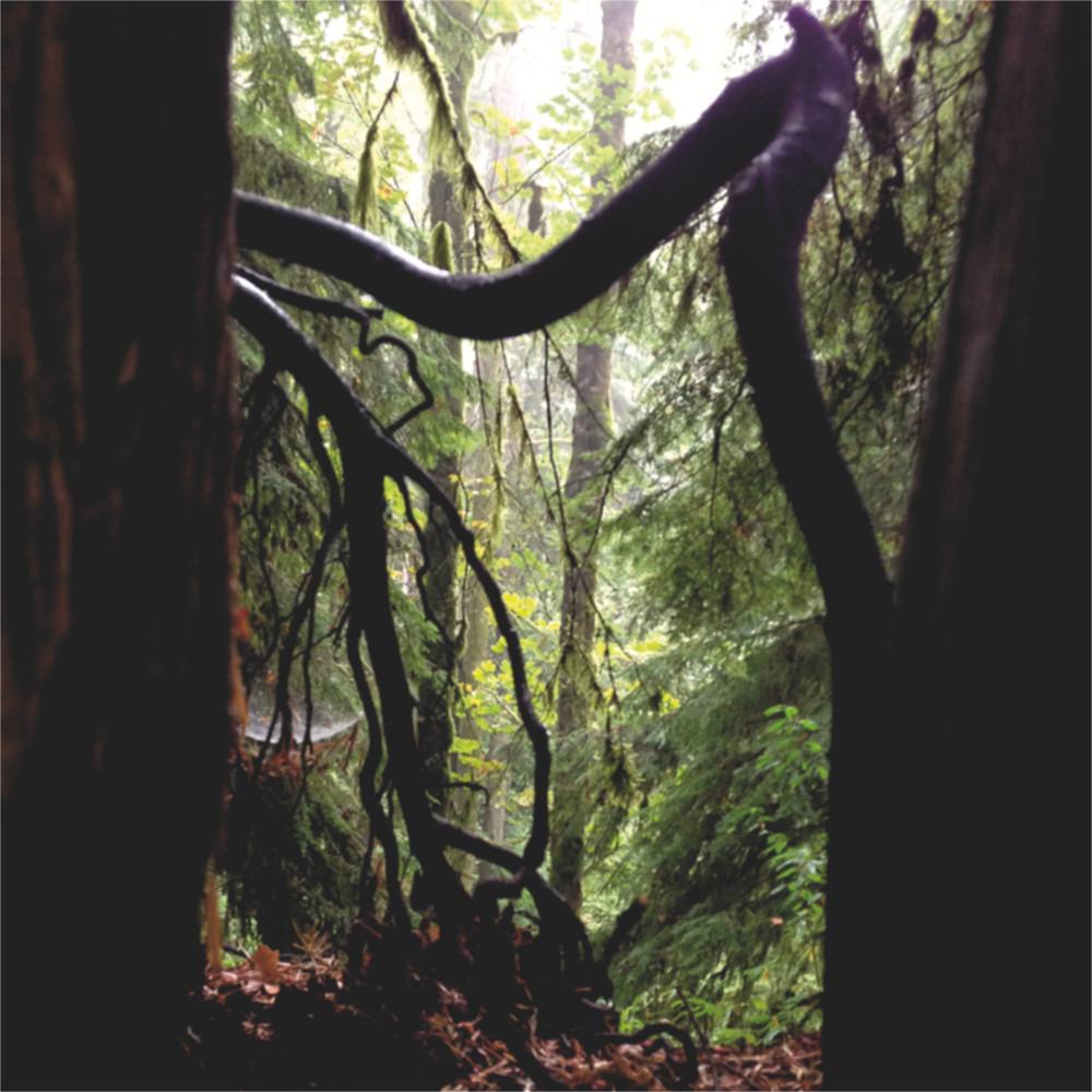 Shadowy tree trunks