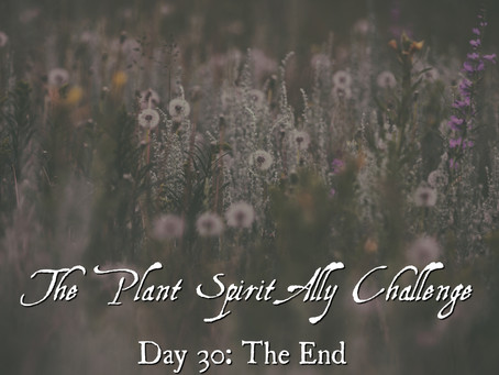 Plant Spirit Ally Challenge Day 30: The End