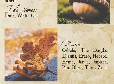 The Magic of Oak