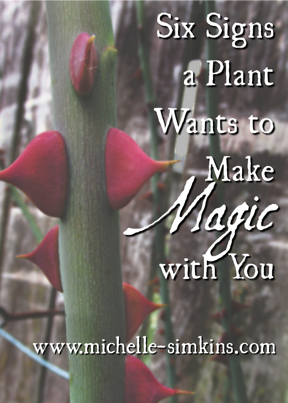 Six Signs a Plant Wants to Make Magic with You