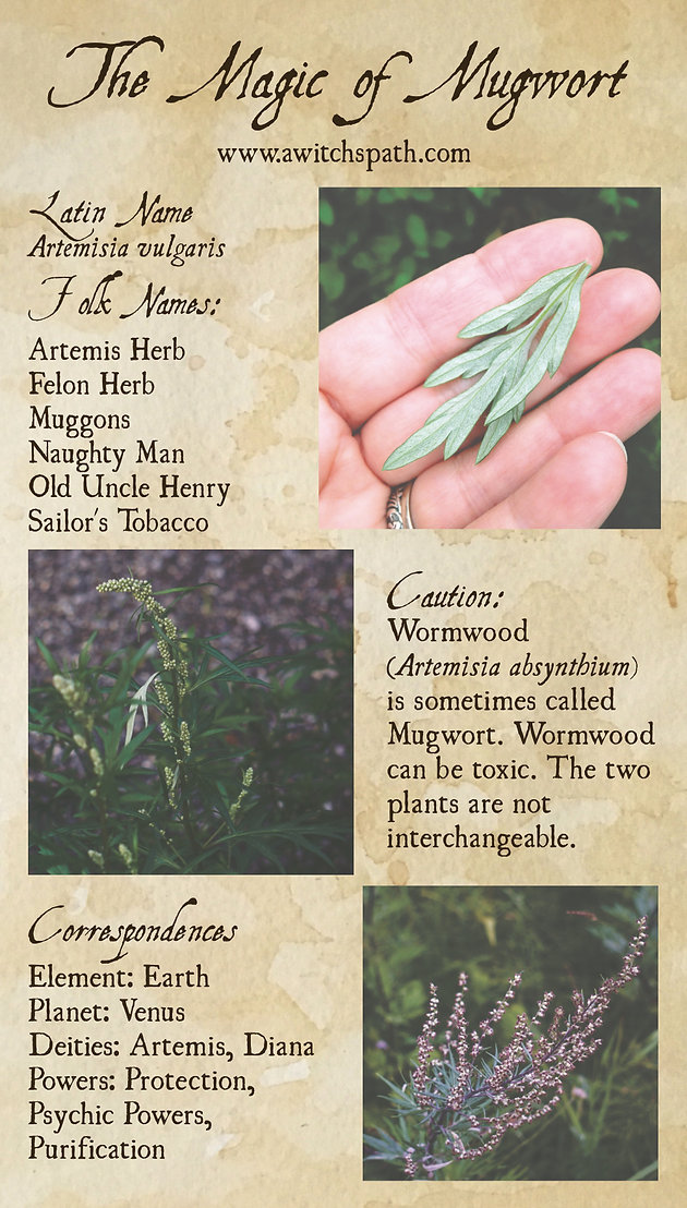The Magic of Mugwort