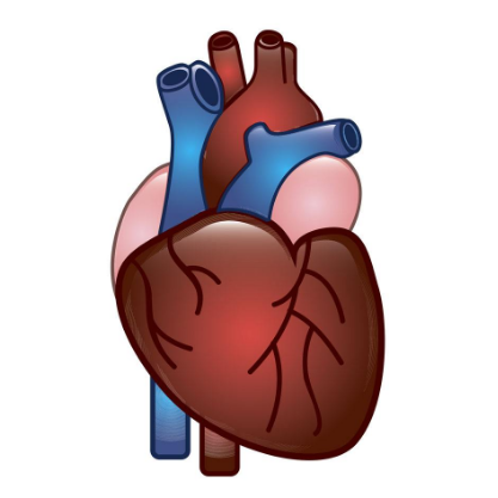 Enzymogrammes cardiaques