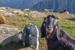 Loraine Humeau adventure stoots frontal husky paragliding Himalaya Skywalk supair-5