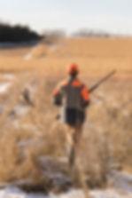 Flushing pheasant in South Dakota