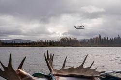 Alaska moose hunt,sam stukel (6)