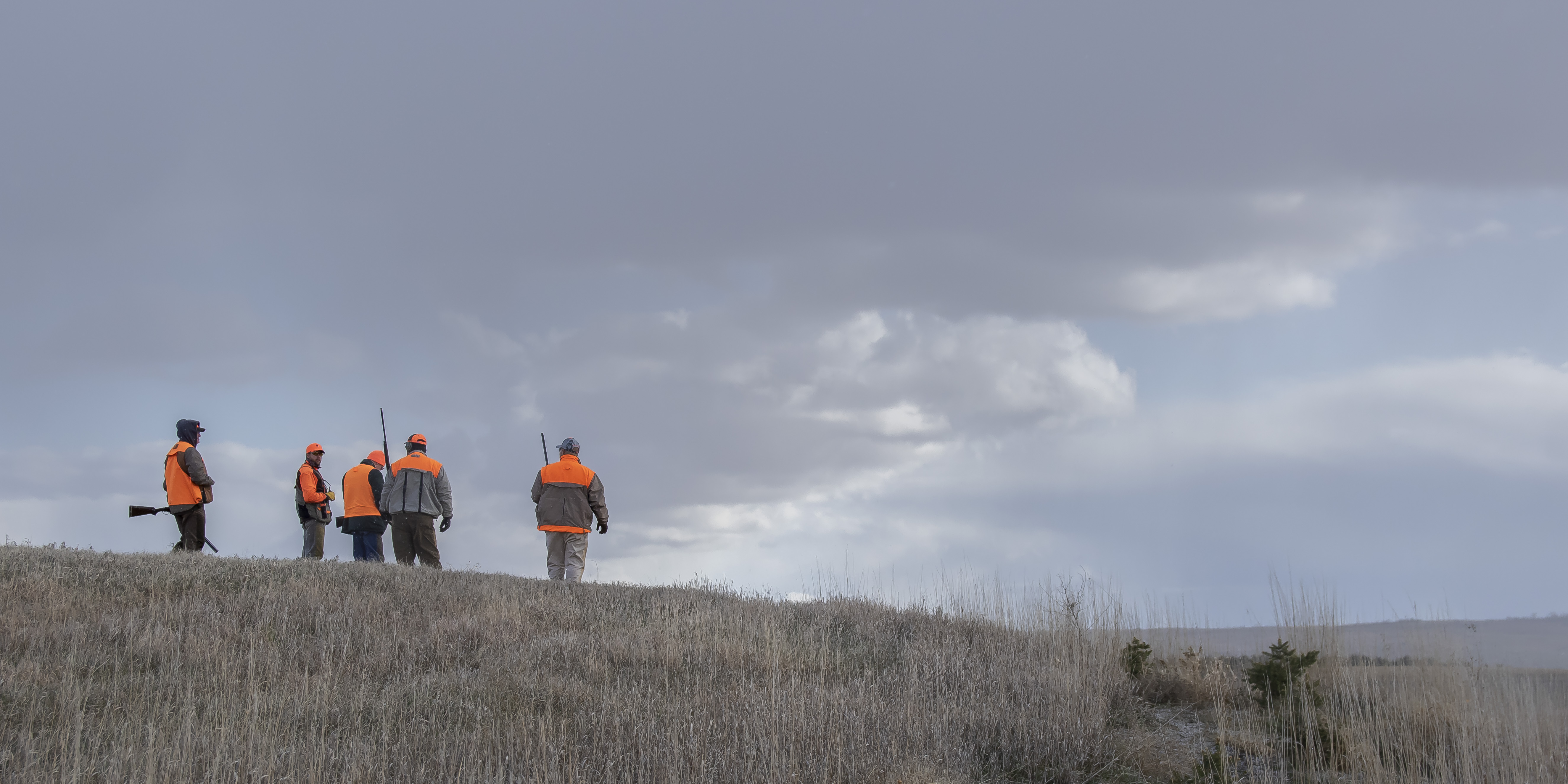 Pheasant hunters in SD