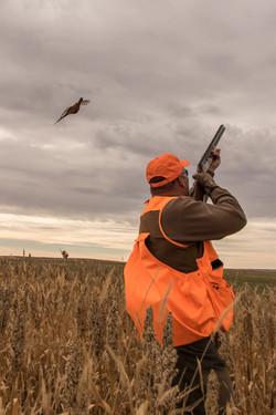 Pheasant hunting action
