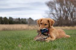 sam stukel,pheasant hunting-22