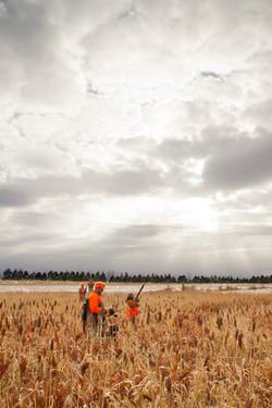 South Dakota pheasant hunting.
