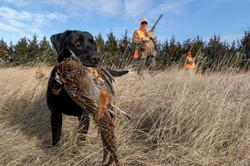 sam stukel,pheasant hunting-8