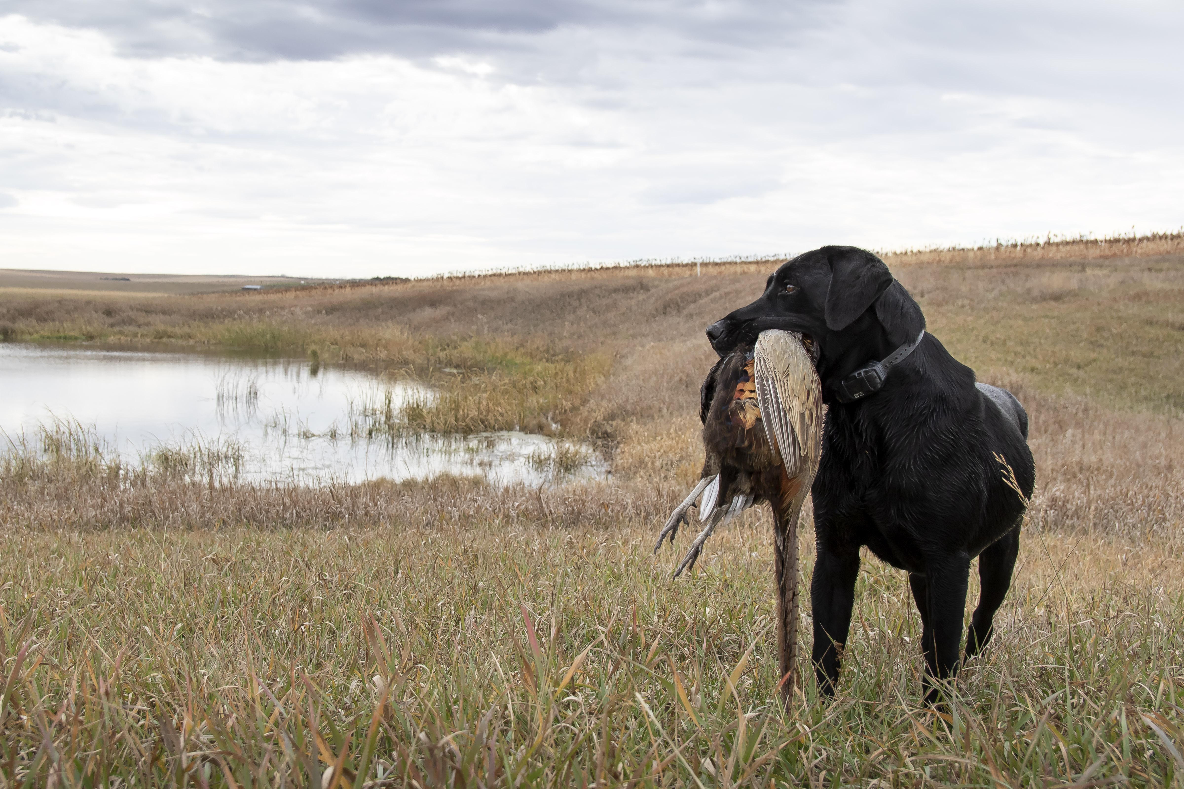 sam stukel,pheasant hunting-20