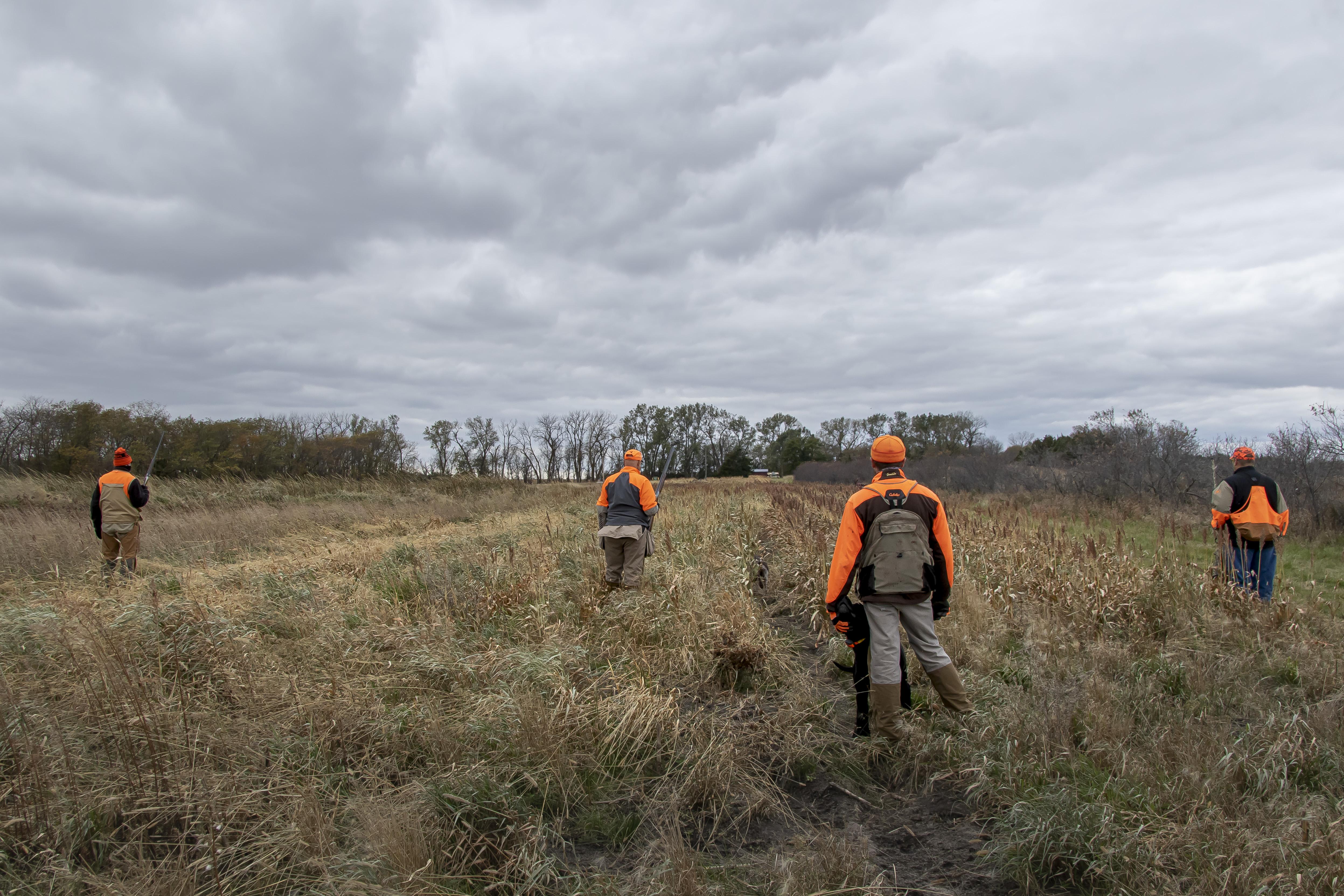 South Dakota pheasant hunting