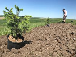 Nate planting trees