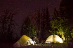 MT sheep,camp stars