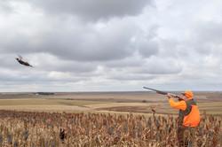 sam stukel,pheasant hunting-14