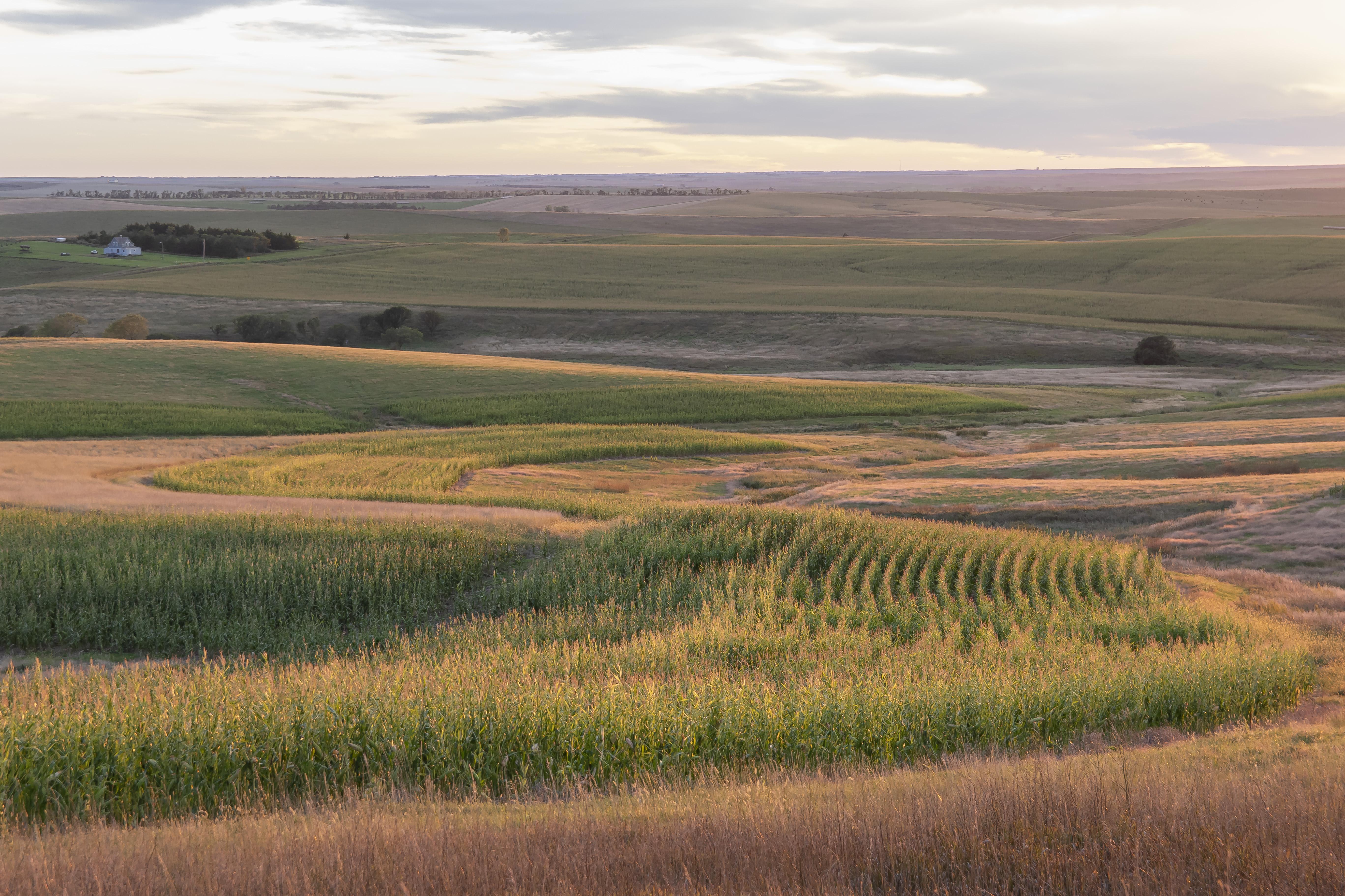 pheasant habitat