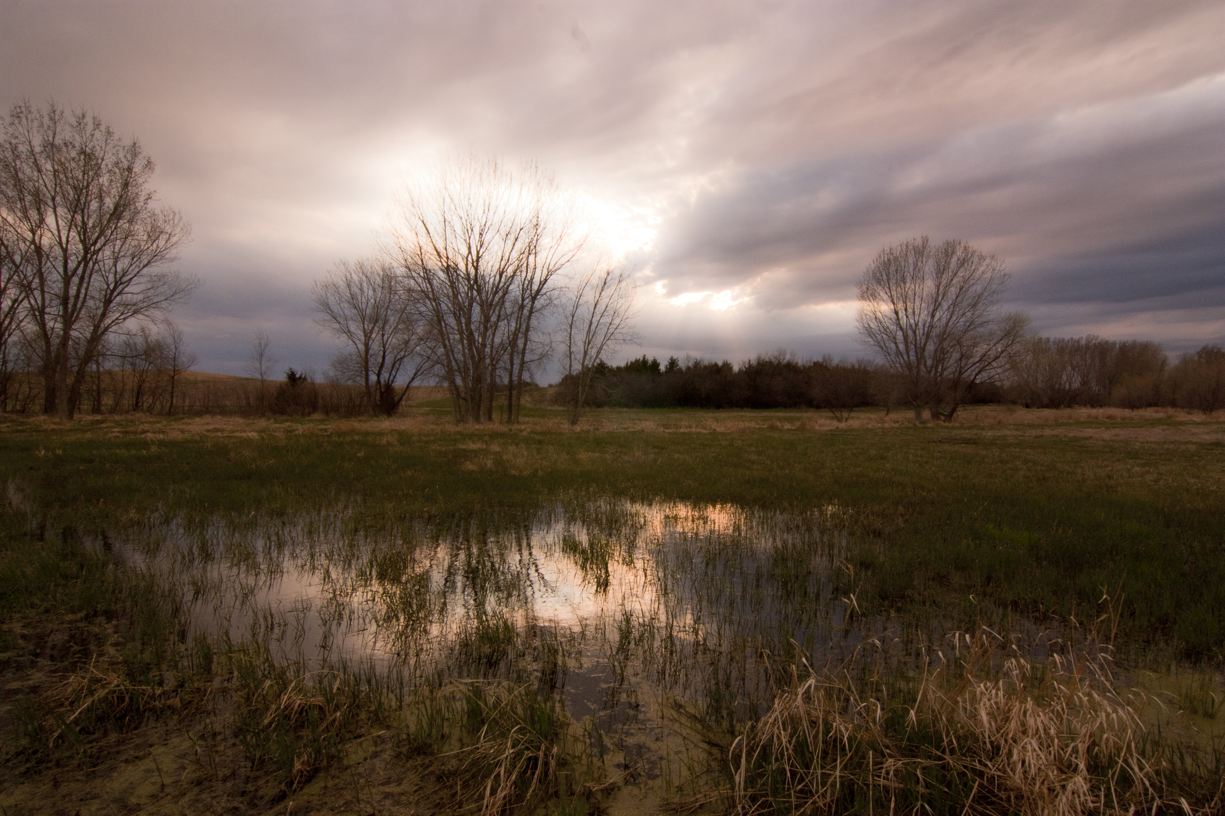Pheasant habitat at Stukel's
