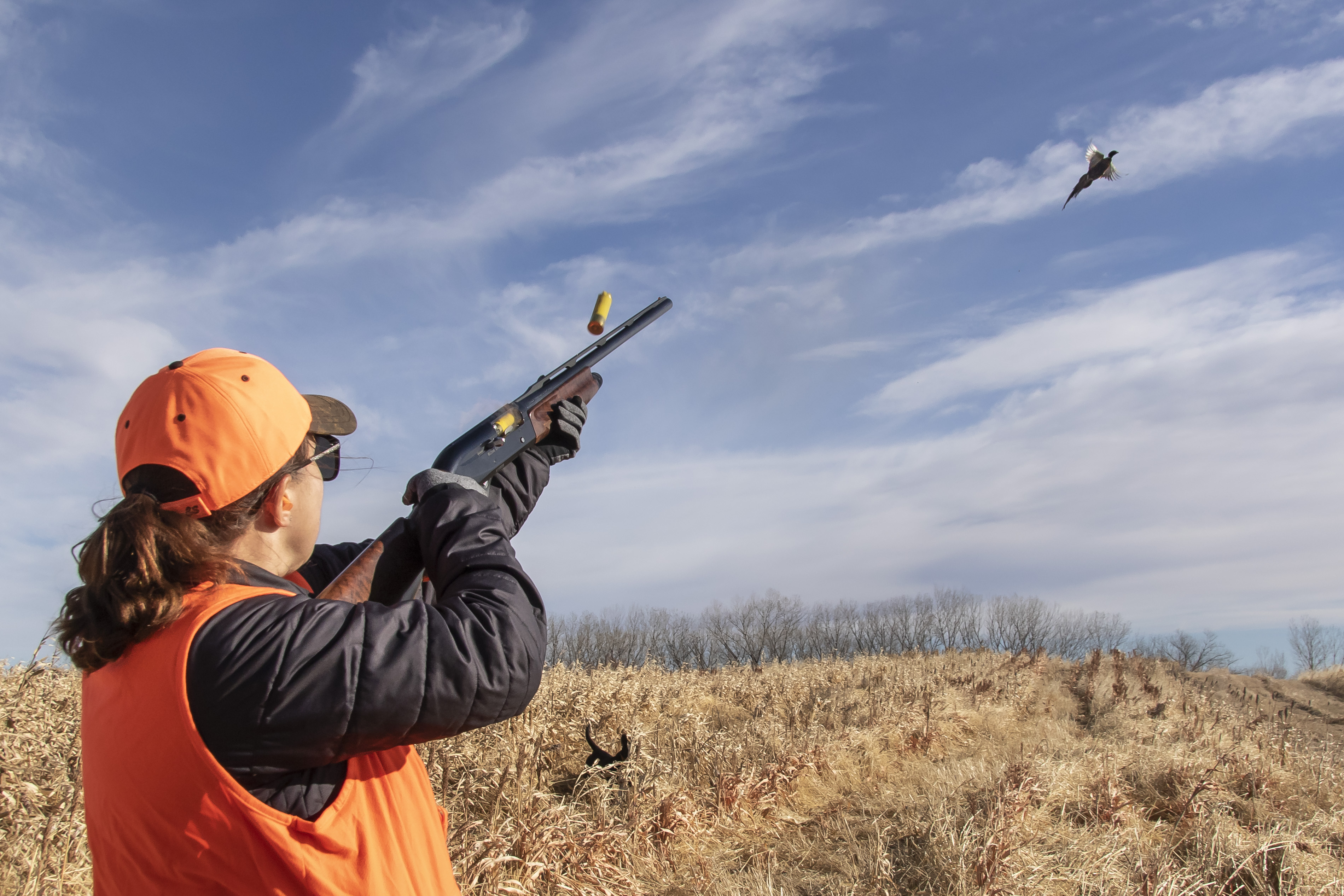 Pheasant hunting action